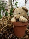 Teddybär draußen im Topf Stockbilder