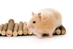 Teddybär-Hamster Stockbilder