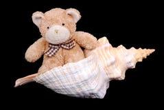 Teddybär im Seashell Stockfoto