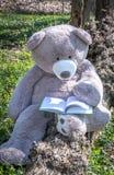 Teddybär im Wald mit einem Buch stockbilder