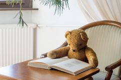 Teddybär liest ein Buch in der Bibliothek - Studieren von Szene stockbild