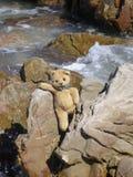 Teddybär in Meer Lizenzfreies Stockbild