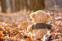 Teddybär sitzt zurück auf gefallenem Herbstlaub lizenzfreies stockbild