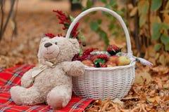 Teddybär und Korb Stockfotografie
