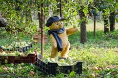 Teddybär wählt Apfel vom Baum - Herbsternte aus lizenzfreies stockbild
