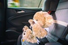 Teddybär wird in den Gurt an der Vollbremsung gedrückt lizenzfreies stockfoto