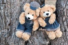 Teddybären, die auf einem Baum sitzen Stockbild