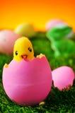 Teddybärküken, das von einem rosa Osterei auf dem Gras auftaucht Lizenzfreies Stockfoto