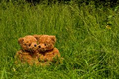 Teddybear couple sitting in the grass. Cute bears enjoy the sun Stock Photos