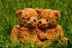 Teddybear couple sitting in the grass stock photography