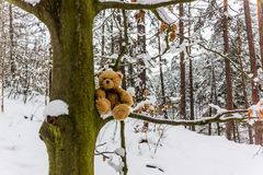 Teddybear Dranik在南Czechia的冬天森林里 免版税库存照片