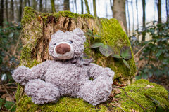 Teddybear in the Forest. A teddy bear sitting on a tree stump in the forest Royalty Free Stock Image