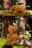 Teddybears looking at each other. Sitting on a fence in the wood Royalty Free Stock Photo
