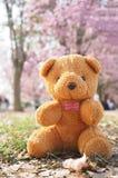 Teddybeer in de tuin stock foto's