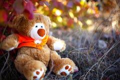 Teddybeer die in bos wordt verloren Stock Afbeeldingen