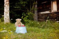 Teddybeer die met thee op twee wachten Stock Fotografie