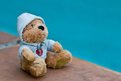 Teddybeer door de pool Stock Afbeelding