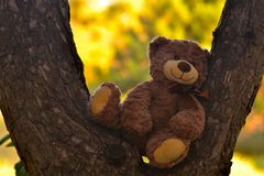 teddybeer in een pijnboombos stock afbeeldingen