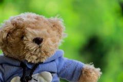 Teddybeer op een vage boomachtergrond Royalty-vrije Stock Foto's