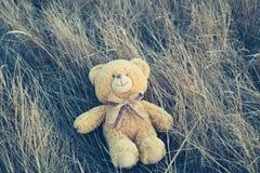 Teddybeer op het gras Stock Foto's