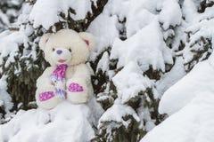 Teddybeerzitting in de sneeuw op naaldboom Royalty-vrije Stock Fotografie