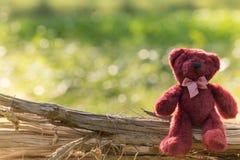Teddybeerzitting eenzaam in de tuin stock foto