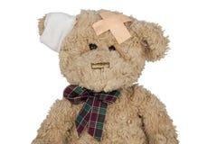 Teddybesnoeiing Royalty-vrije Stock Foto's