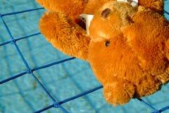 Teddybär gesichert durch Poolnetz Lizenzfreie Stockbilder