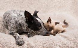 Teder ogenblik tussen een jonge hond en een kat Stock Foto's