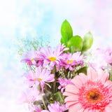De roze bloemen van de lente stock afbeeldingen
