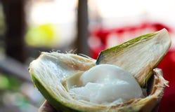 Tedere witte die kokosvleesmalai uit ruwe selectief geconcentreerde kokosnoot wordt uitgehold royalty-vrije stock foto's