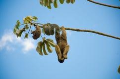 Tederheid het hangen van een boom stock afbeelding