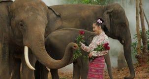 Tederheid van jonge aantrekkelijke Aziatische vrouw in traditioneel kostuum met olifant stock video