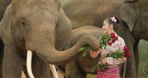Tederheid van jonge aantrekkelijke Aziatische vrouw in traditioneel kostuum met olifant stock footage