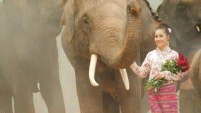 Tederheid van jonge aantrekkelijke Aziatische vrouw in traditioneel kostuum met olifant stock videobeelden