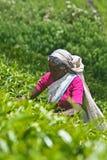 Tee-Arbeitskraft lizenzfreie stockfotografie