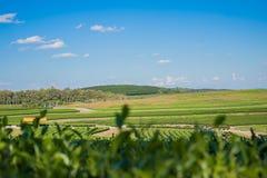 Tee-Bauernhof Nuture Lizenzfreie Stockfotos