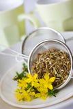 Tee des gemeinen Johanniskrauts - Hypericum perforatum Lizenzfreie Stockfotografie