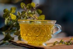 Tee des heiligen Basilikums, tulsi, Ocimum tenuiflorum, in einer transparenten Schale mit den Blättern nützlich für Herzkrankheit lizenzfreie stockfotografie