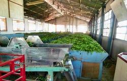 Tee-Fabrik Stockbild