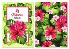 Tee-Flieger oder Broschüren-Karte mit hawaiischer Hibiscus-roter Duft-Blume Hintergrund für Tee-Verpackendruck-Entwurf vektor abbildung