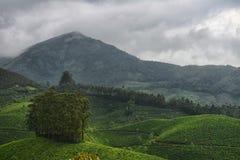 Munnar Tee-Gärten Lizenzfreie Stockbilder
