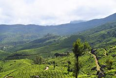 Tee-Gärten, grüne Hügel und blauer Himmel - üppige grüne Naturlandschaft in Munnar, Idukki, Kerala, Indien stockfoto