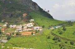 Tee-Gärten Indien stockfoto