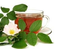 Tee gemacht von der Hundrose Stockbilder