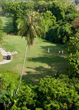 Tee off. Golf player teeing off in a tropical golf course Stock Photos