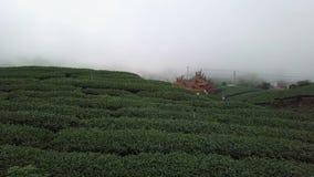 Tee-Plantage in Alishan-Bereich, Taiwan Vogelperspektive im dichten Nebel stock video footage