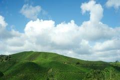 Tee-Plantage, Cameron-Hochländer Lizenzfreies Stockbild