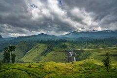 Tee-Plantage im Berggebiet in Nuwara Eliya, Sri Lanka Stockbild