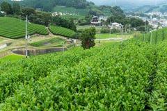 Tee-Plantage in Japan Stockfotografie